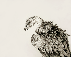 Vulture by Kanizo