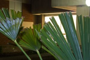 Palm Leaves by silverspoken2005