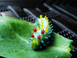 Cecropia Silkworm 1 by Cubist-Assassin64