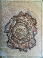 Wood rose... by Yancis