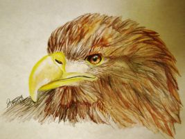 Golden Eagle by Jaylynessa