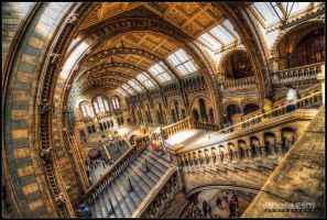 Natural History Museum by dynamick