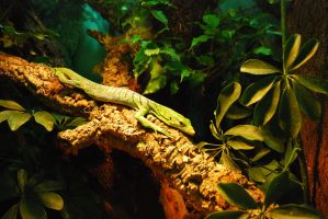 Lizard in the jungle by iisjahstock
