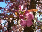 Afternoon Blossom by PsychedelicSmirk