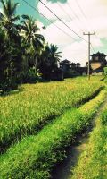 A countryside street in Bali by WhenWeKisstheSky