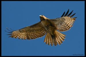 New Years Red Tail by AirshowDave