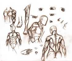 Anatomy art by R62