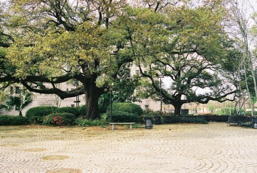 Congo Square - New Orleans by frchblndy-stock