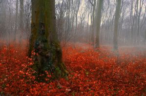 Autumn Forest color red - AStoKo STOCK by AStoKo