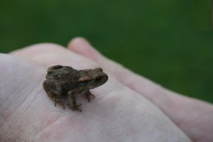 Little frogie by AlmostInsane