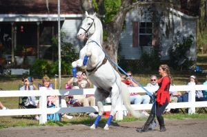 Lipizzaner Stallions 12 by Lauren-Lee