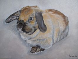 A bunny called Ginger by recentrunes