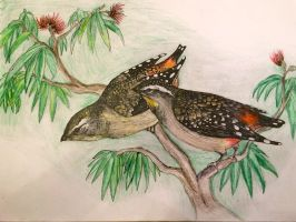 Spotted Pardalotes by Cypselurus