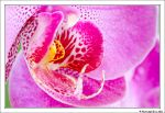 Coeur d'Orchidee by PhotoSph-Eric