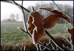 Traces of winter by jchanders