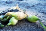 Plant Photography in the Beach by jaxen13