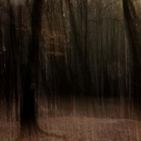 Dark forest by mad366