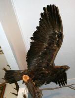 MoA Museum 176 Eagle by Falln-Stock