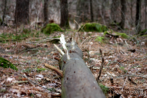 Lying Wood by luckyb30