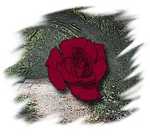 Rose 2 Colored by Shirekat