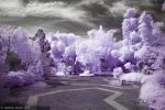 Gardens in IR 4 by DrakeXaos