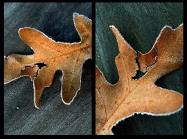 Leaf Diptych by StolenSecrets