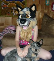 Blue heelers by LilleahWest
