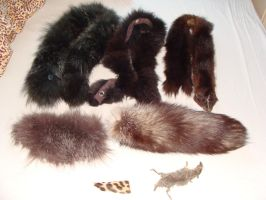 Fur Package FOR SALE or TRADE by Lot1rthylacine