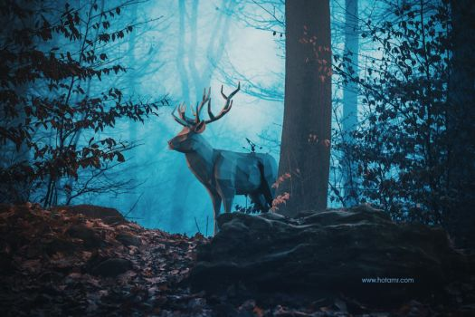 Blue Forest by hotamr