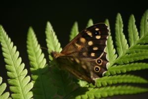 Classic Butterfly Photo by N1ghtf4ll3r