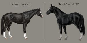 Tuxedo comparison by MistyofSunrise