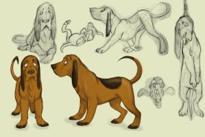 Bloodhound model sheet by sarahhorner