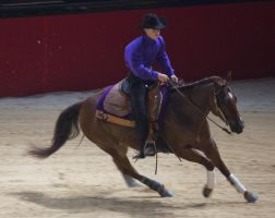 STOCK - Equitana 2013-158 by fillyrox