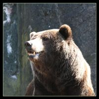 Bear by Globaludodesign