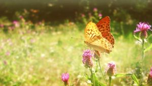 Butterfly by Iulia-Oprinesc