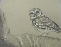 The Spotted Owl by ekvogl