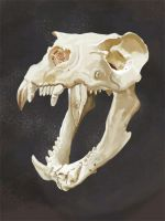 Sea Lion Skull Digital Painting by Mathieustern