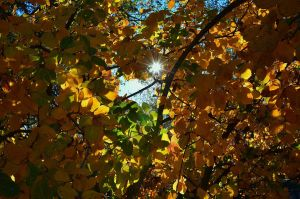 Sunburst through the leaves by Marilyn958