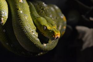 The Peaceful Green Serpent by wheresXmyXcamera