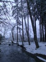 Snow at Belfair State Park 2 by pokemontrainerjay