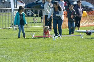 2014 Dog Festival, Try and Train 5 by Miss-Tbones