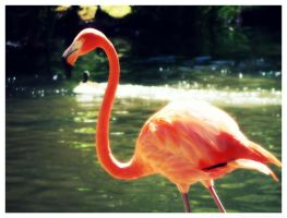 ...Zoo 12... by SCiganovich