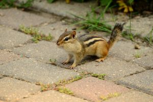 These chipmunk pouches... so cute by DarkBeforeDawn23