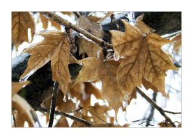 ice leaves by tominabox1