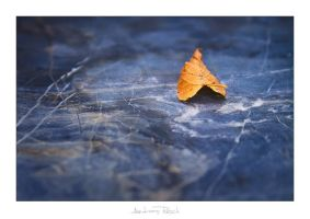 Autumn Leaf by AndreasResch