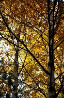 Colors of fall by Miaow-w