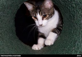 Syrus in the Kitty Tunnel 01 by phantompanther