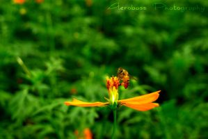 Bee by kyle-aerobass
