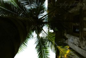 .:under the coconut tree:. by cd-13