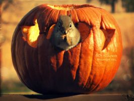 Peter-Peter-Pumpkin-Eater by BritLawrence